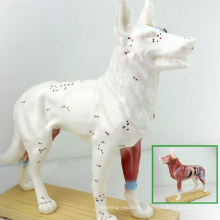 A05(12005) Plastic Veterinarian's Dog Canine Anatomical Acupuncture Models 12005